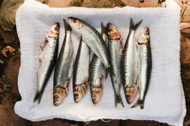 7-namirnica-sardine