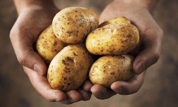 Krompir-10-razloga-zasto-ga-volimo
