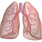 Prirodni lijek za tretiranje astme, bronhitisa, kašlja i problema s plućima!