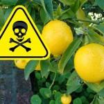 lemon-tree-danger3
