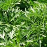 biljka-16sati