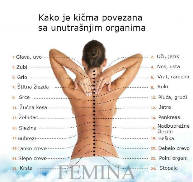 leđa-femina