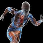 ljudski-organi-640x360
