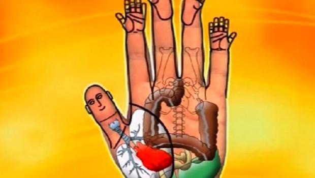organizam-na-dlanu-1