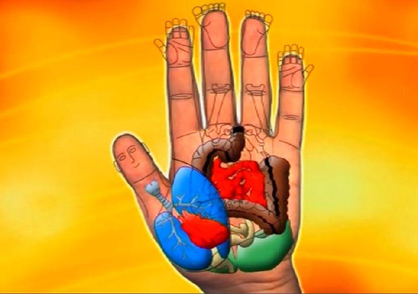 organizam-na-dlanu-4