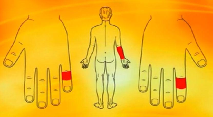 organizam-na-dlanu-6