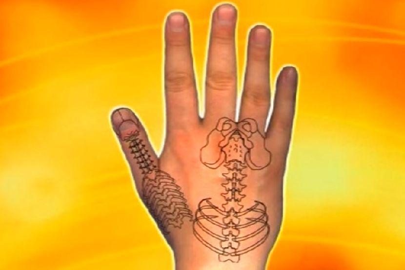 organizam-na-dlanu-7