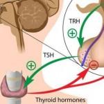 stitnjaca-hormoni