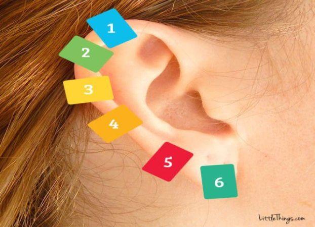 uho-stipaljica-1
