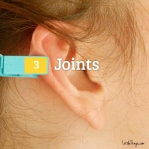 uho-stipaljica-4