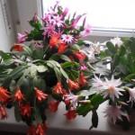 cvijece-femina