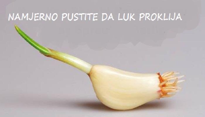 luk-proklijao