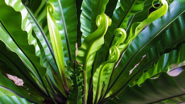 biljka-dnevne