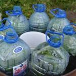 Efikasno i praktično gajenje krastavca u buretu. Odlična ideja za sve baštovane! (FOTO)