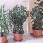 cvijece-biljke