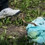 ujed-zmije