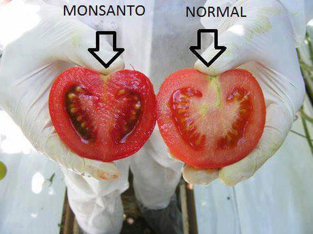 paradaiz-normalan i gmo