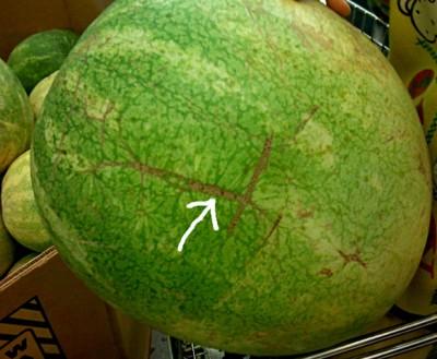 sara-na-lubenici