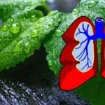 15 biljaka koje iscjeljuju i čiste pluća, liječe astmu, kašalj, bronhitis …