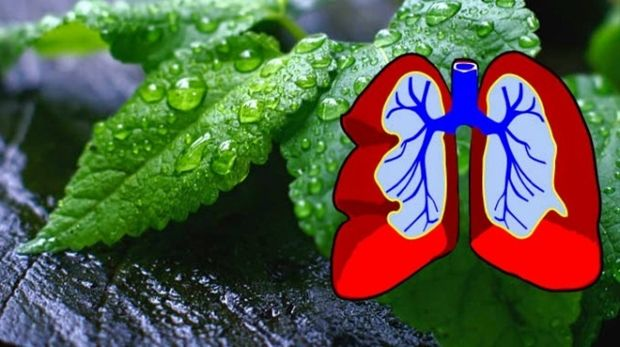 pluca-biljke