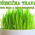 psenican-trava