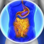 crijeva (1)