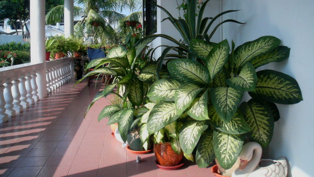 biljka-opasna
