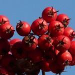 Kod nas raste kao korov: Ovo je najljekovitija biljka na svijetu, koja sve bolesti liječi! (RECEPT)