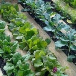 Evo kako da sami uzgojite organsko povrće uz pomoć PALETE