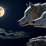 vukovi