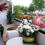 cvijece_balkon