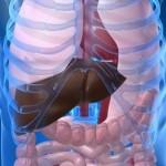 mast-crijevo