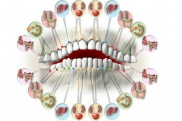 zubi-i-organi