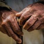 starac-ruke