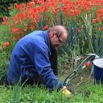 vrt-vrtlarenje-korov