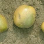 Zeleni-krompir