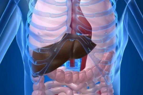 crijevo-tijelo-organi