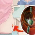 stomak-bakterije