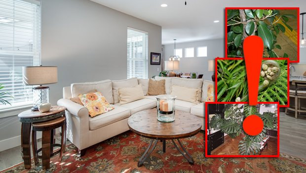dnevna-soba-biljke-620x350
