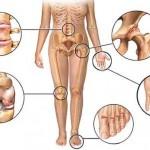 kosti-zglobovi