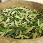 maslinovo-lisce-caj