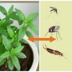 muhe-komarci-biljka