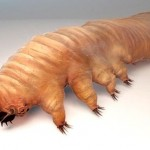 demodex-1