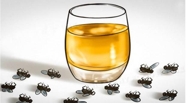 mravi-muhe