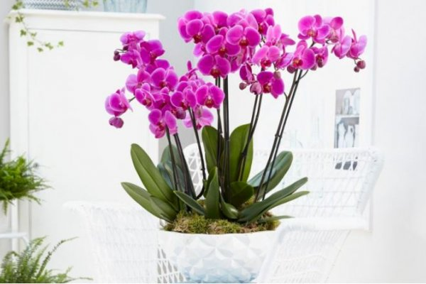 orhideje-cvjetaju