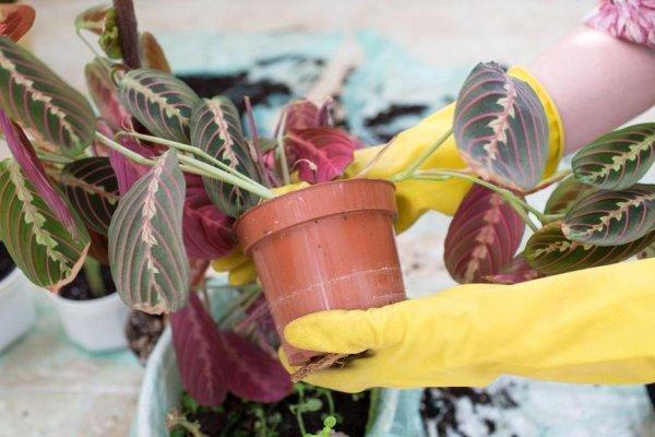 biljke-briga
