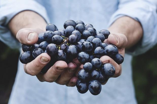 grozdje-pixabay