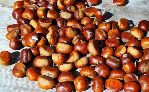 chestnut-4507908_640