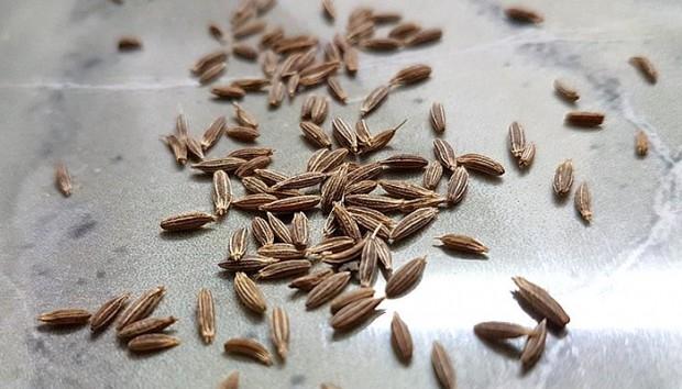 cumin-seeds-3375691_960_720