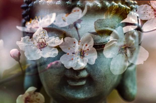 nature-blossom-plant-leaf-flower-petal-1046511-pxhere.com_